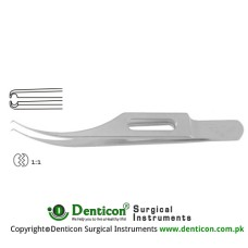 "Pierse-Colibri Corneal Forcep 1 x 1 Teeth Stainless Steel, 7.5 cm - 3 1/4"" Tip Size 0.1 mm"